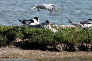 Marais de sebastopol noirmoutier
