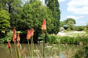 Petit étang dans le jardin des Olfacties