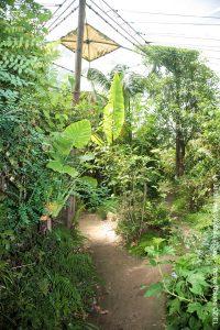 Serre tropicale du jardin des olfacties